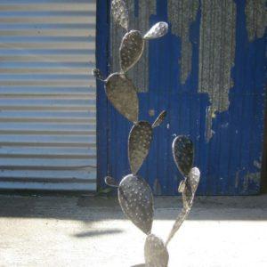 Cactus modèle ULURU